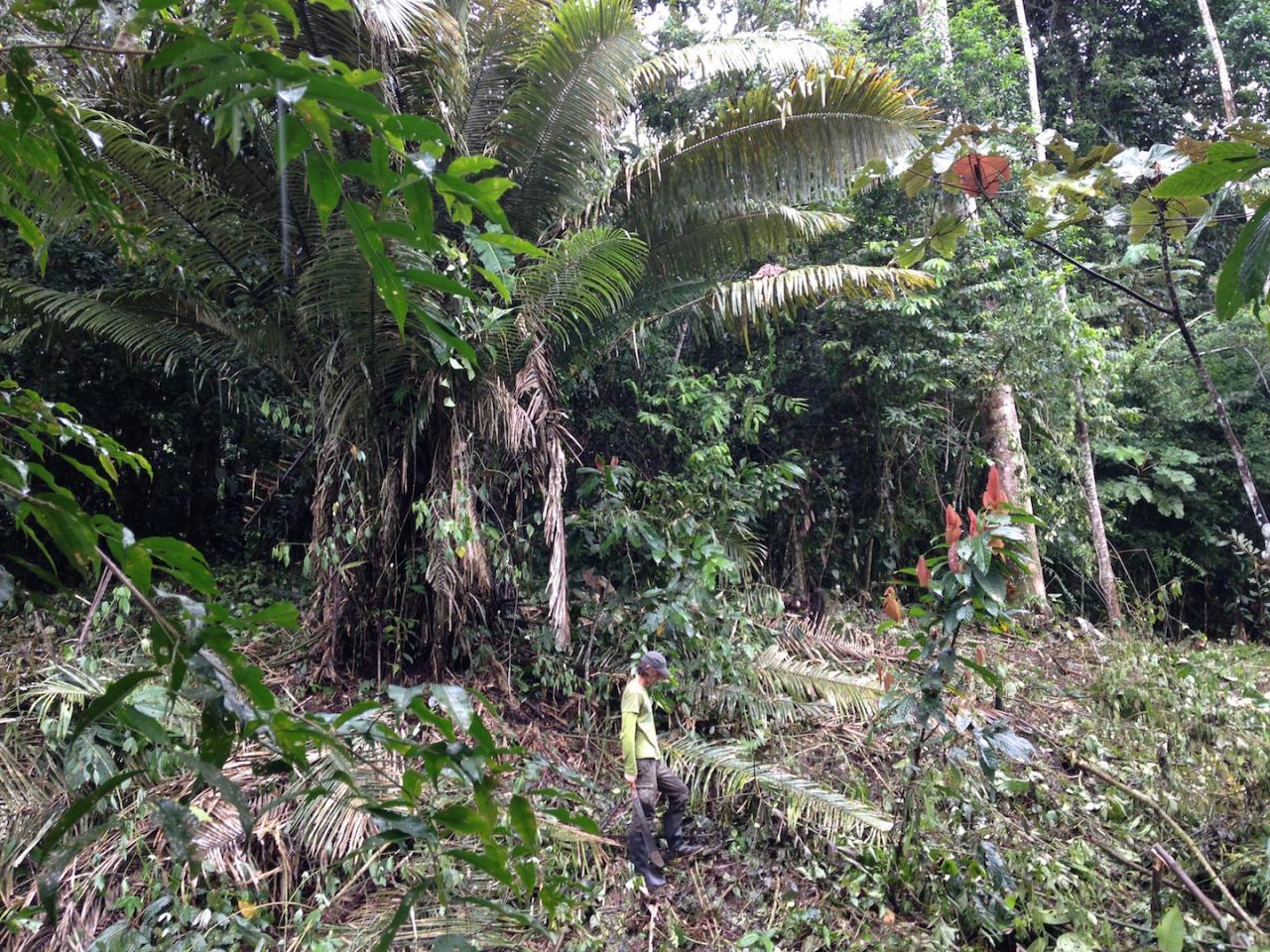 palmier phil