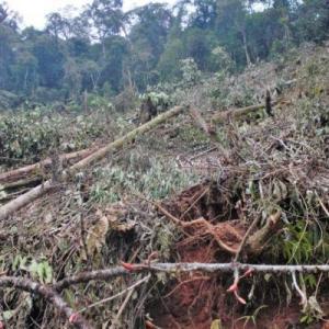Amazonie de forestation 1
