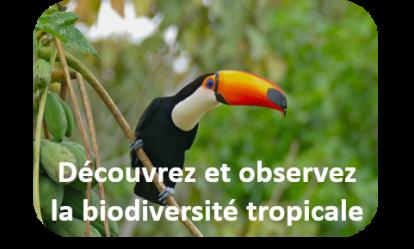 Biodiversite tropicale
