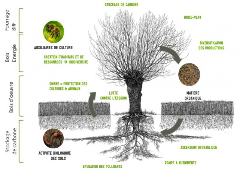 Schema agroforesterie services